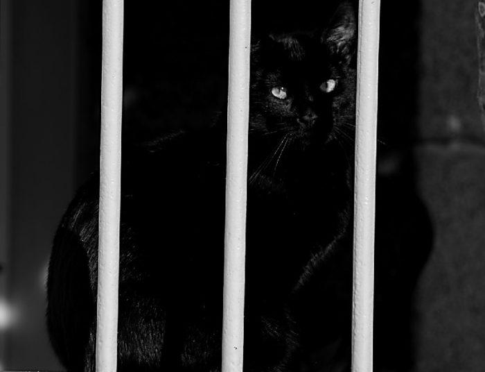 Ceasul rau pisica neagra
