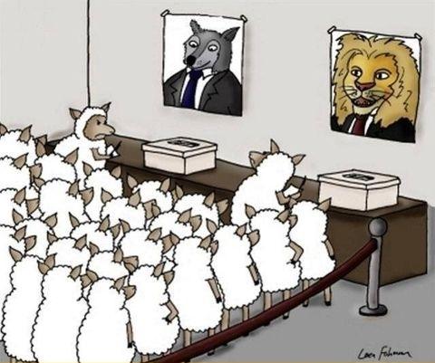 oaie politica